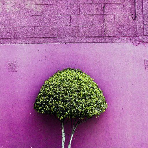 cropped-ecatepec-shrub-1-1-of-1-copy-vc.jpg