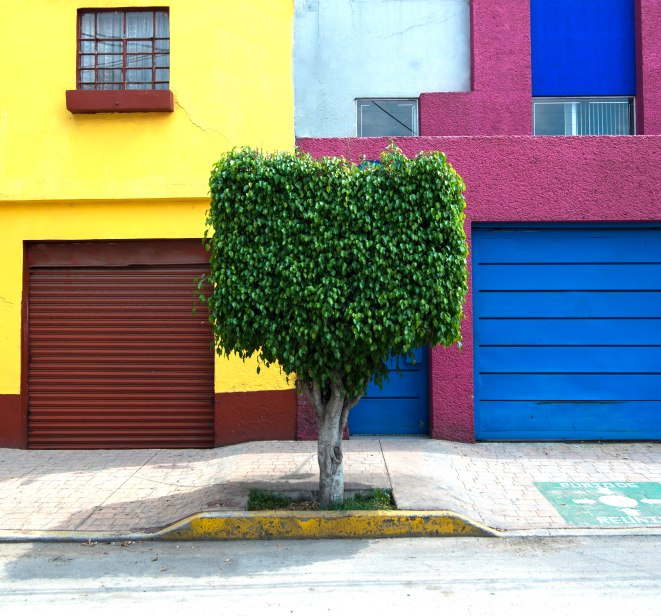 Mexico City Tree Colorful Scene 1-8727 adj 3 copy