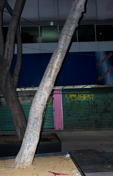 Mexico City two trees at night-4590 VC